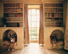 Doggy room. Love boxers!!!!
