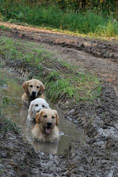 any puddle will do...