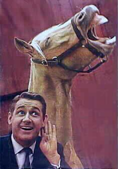 Mr. Ed (The Talking Horse) One of my regulars! Made more sense then - and now - than most of televisions 'prime' time gross exageration of 'talent!'