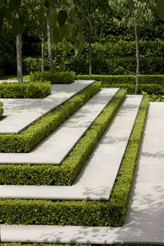 This will be used as a hardscape, with the boxwood hedges being used to accentuate the stepts to help tie in the boxwood fences in the garden to the patio in a more intimate way. Garden Steps, Garden Paths, Box Garden, Garden Floor, Formal Gardens, Outdoor Gardens, Design Jardin, Dream Garden, Landscape Architecture