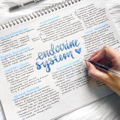 notes revision - notes revision ` notes revision layout ` notes revision ideas ` notes revision pretty ` notes revision study tips Cute Notes, Pretty Notes, Good Notes, Revision Notes, Study Notes, Note Taking Tips, Taking Notes, School Study Tips, Study College