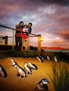 Saksikan Penguin berbaris di PHILLIP ISLAND bersama SMAILING TOUR. #keepSMAILING http://www.smailingtour.co.id/product.php?id_product=1373