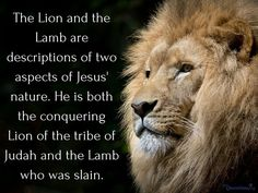 How should we understand the Lion and the Lamb passage? Do both the Lion and the Lamb represent Jesus? Lion Of Judah Jesus, Judah And The Lion, Lion And Lamb, Prayer Quotes, Jesus Quotes, Bible Quotes, Bible Verses, Lion Bible Verse, Scriptures