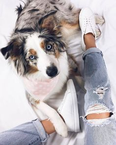 Photo of an Australian Shepherd. Looks like a Border Collie as well. Beautiful photo of Australian Shepherd Dog. Cute dog photos of Australian Shepherds. Aussie Puppies, Cute Dogs And Puppies, I Love Dogs, Doggies, The Animals, Baby Animals, Cute Dogs Breeds, Dog Breeds, Beautiful Dogs