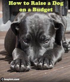 Raising a dog costs $1,300-$1,800 for the first year alone. Find out how to get the best for your new pup even if you're on a budget.