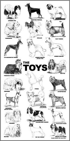 toy dog grooming poster