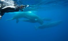 I'd always been scared of these great creatures but while filming in the Azores, I jumped into the ocean amid a pod of whales – and met another sentient being