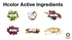 Organic Hair Color Ingredients
