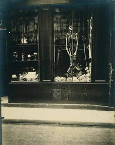 Eugene Atget. Zoologist's (Taxidermists) Shop, 1927
