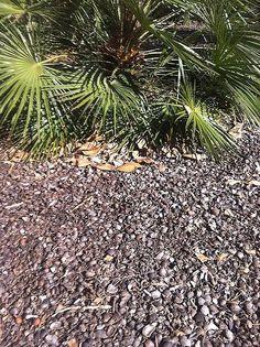 Repoblación autóctona - Jardinería con flora autóctona - Documentación