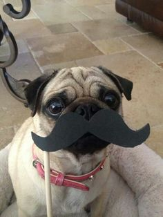 Idk which to be more excited about! A cute dog or the mustache!!!