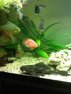 Friendly happy fish