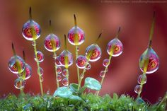 Dev on buds by Alberto Ghizzi Panizza on 500px