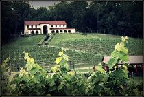 Maryland Wineries