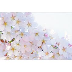 Spring Blooms ❤ liked on Polyvore featuring backgrounds, pictures, decor, flowers, floral and filler