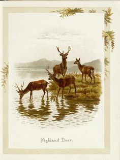 Told by the sunbeams and me Art And Illustration, Antique Illustration, Deer Art, Moose Art, Deer Drawing, Different Forms Of Art, Power Animal, Prince, Autumn Art