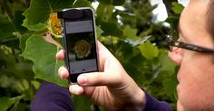 This A New App Instantly Identifies Plants And Flowers, And It's Awesome