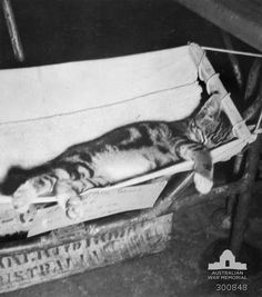 Australian ship's cat on board HMAS Kanimbla during WWII