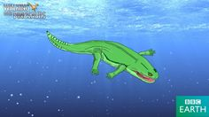 Koskinonodon perfecta Named by E. B. Branson and M. G. Mehl, 1929 Diet: Carnivore/Piscivore Type: Stereospondyl trematosaur temnospondyl amphibian (metoposaur) Size: 10 feet (3 meters) long and 200...