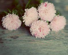 Photographie fleur rose rustique bleu teal par dullbluelight, $30.00