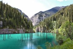 The underwater forest of Lake Kaindy. | Craziest Things In Nature You Won't Believe Actually Exist