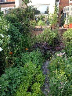 """""""…increasingly I am finding it very hard to justify that sort of tidy up, very designed garden over the fact that it's an ecosystem and I care much more about the insects and the …"""