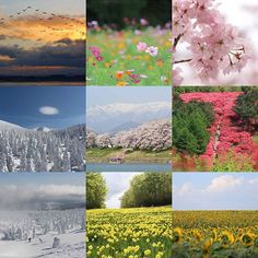 【homazuchan】さんのInstagramをピンしています。 《今年の思い出  今年一年ありがとうございました  皆さま良いお年を  #2016bestnine #ありがとう #Thankyou #感謝 #flower #flowers #instagood #桜 #つづじ #水仙 #向日葵 #コスモス #花畑 #自然 #風景 #雪 #nature #スキー #skie #宮城 #山形 #ファインダー越しの私の世界 #写真好きな人と繋がりたい #写真撮ってる人と繋がりたい #2016ベストナイン》