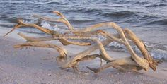 The driftwood gallery is here! Driftwood wall art and driftwood sculpture.
