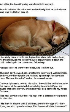 A funny about a sweet dog (parents may appreciate this too) :)