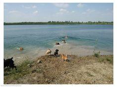 Kutyás helyek - Kutya Camping Bugyin - kutyabarát vízpart/strand  #valódi #kutyabarát #strand #bugyi #hungary #magyarország #kutyabaráthelyek #dogfriendly #petfriendlyplaces #petfriendly #places