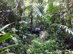 Tropical+Rainforest | Tropical Rainforest Hike at Selva Bananito, Costa Rica