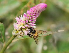 Pebble Shore Lake, Bee, Plants, Animals, Honey Bees, Animales, Animaux, Bees, Animal