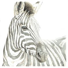 """""""Aware"""" 🦓❤️ This was one of the first watercolour paintings that I did after deciding to try to make a living from my art. I used a photo taken by my uncle as reference, and my mom owns the original. Humble beginnings! See more of my wildlife art in my online shop! #zebra #workingartist #wildlifeart 🇿🇦 The Happy Struggling Artist Watercolour Paintings, Painting & Drawing, Watercolor, Animal Alphabet, Modern Artwork, Wildlife Art, Animal Paintings, Original Artwork, My Arts"""
