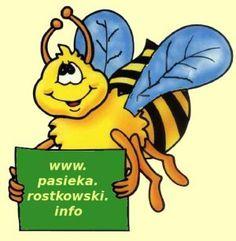 Miody pszczele - Pasieka Rostkowski