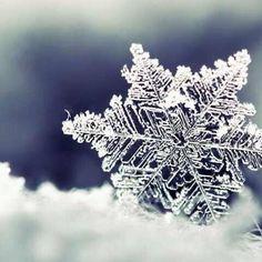 A single snowflake...