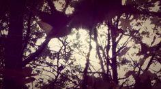 still one of my favorites. // ASPIDISTRAFLY — LANDSCAPE WITH A FAIRY — satsuki shibuya . journal