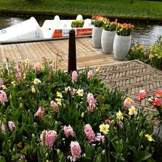 Kaukenhof Gardens #kaukenhof #tulip