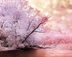 Nature Photography, Dreamy Pink Lavender Trees, Baby Pink Nature Bokeh, Pink Purple Landscape Nature Decor, Surreal Nature Art Print 8x10 on Etsy, $32.45 CAD