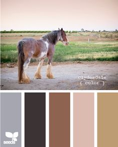 clydesdale color