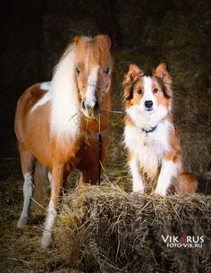 Minihors and Ray By VIKARUS http://www.equestrian.ru/