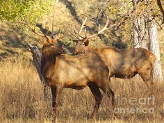 featured/evening-sets-on-the-elk-robert-frederick