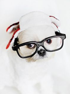 Dog Safe Holiday Foods: The Naughty & Nice Lists | PHOTO CREDIT: Chic Sprinkles | Pretty Fluffy #dog #health