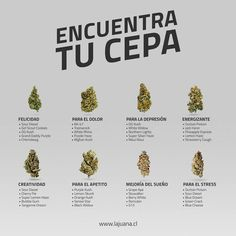 Weed Facts, Weed Edibles, Buy Weed, Smoking Weed, Ganja, Herbalism, Medical Marijuana, Gardens, Herbs