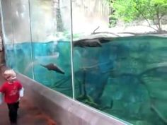Small blond boy playing with sea otter in San Diego zoo - CUTE INOCENCE!!