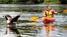 Paddle the Charles River in a kayak or canoe.