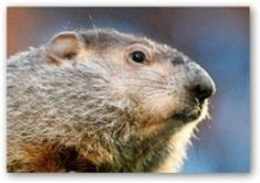 Groundhog Day History from Stormfax® 2013