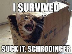 The only reason I know about the Schrödinger story is because of Sheldon on the Big Bang Theory.!!!! lol
