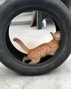 Kitty tries to help change tire...