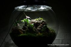 My Miniature Orchid Trial BiOrbAir Terrarium, as pictured on the 8th July 2016.  From this angle you can see Domingoa purpurea on the left hand side of the picture.  The flowers of Masdevallia decumana, with Bulbophyllum falcatum 'Minor' below.  Phalaenopsis parishii can be seen at the top of the cork, on the right hand side of the picture.