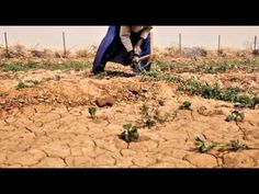 18 million at risk in the Sahel food crisis: urgent help is needed now